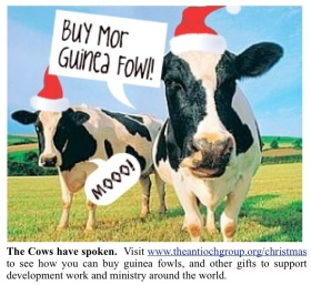 Christmas Cows